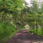 camino_arboles