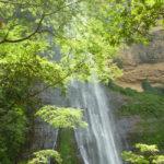 cascada-arboles