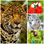 collage-animals-2